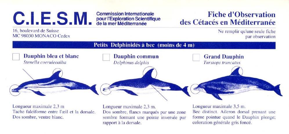 Fiche observation des cetaces